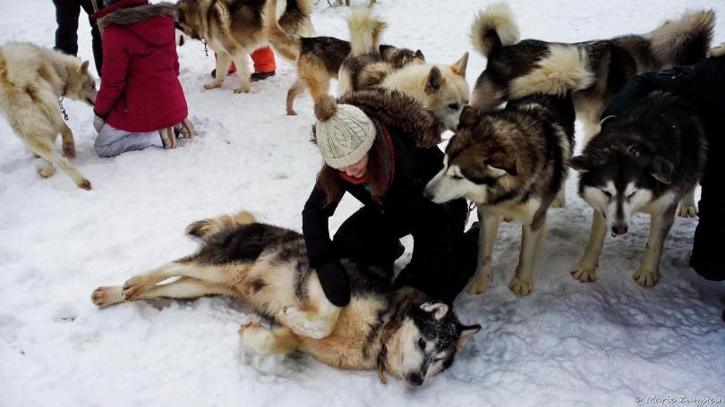 chiens-6